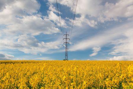 Beautiful yellow rape field in spring Stock Photo
