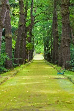 Famous botanic garden on azores photo