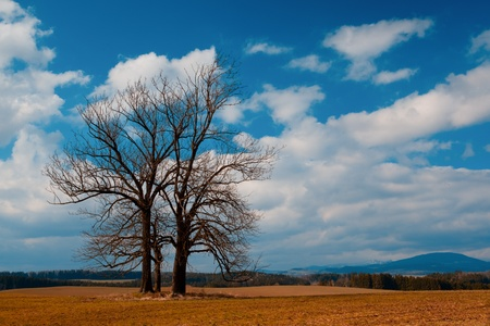 Lonely Trees on the hill Stock Photo - 8569289
