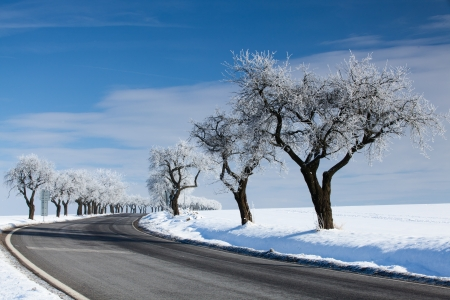season: Empty road in winter