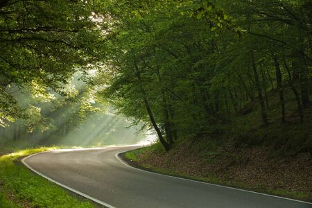 On the road in forest in the morning