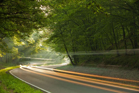 Long exposure on the road in forest in the morning photo