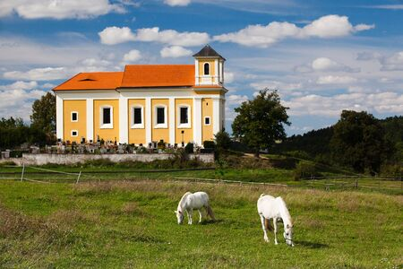 White horses on the pasture near the church and cemetery photo