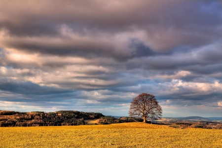 memorable: Memorable tree on the autumn meadow in the daytime Stock Photo