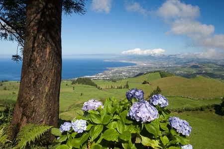 agriculture azores: Aerial view to the city and valley, San Miguel island, Azores