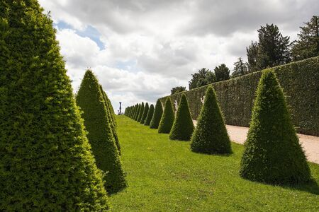 Parterre or conical hedges from Versailles Chateau. France