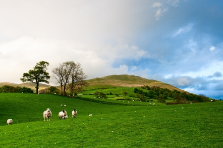 On the pasture in Yorkshire Dales National Park in England