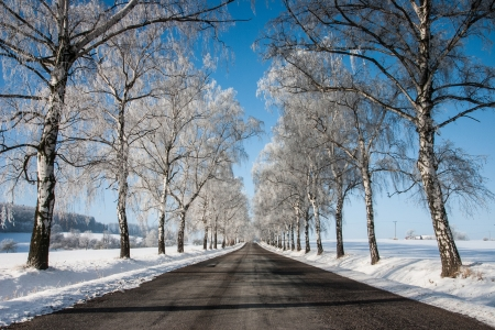Snowy empty road through trees photo