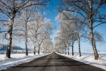 Snowy prázdné silnici mezi stromy