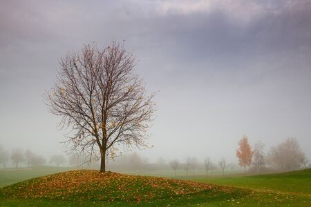 Autumn on the golf course in the mist at sunrise photo