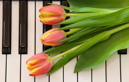 Červené tulipány na klavír Reklamní fotografie