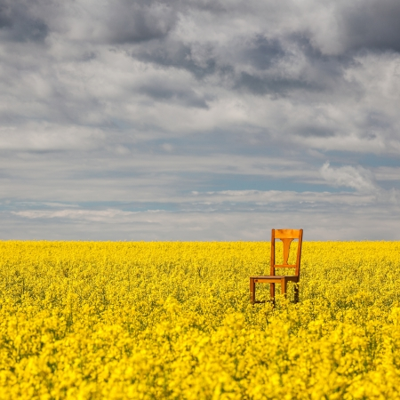 Flowers of oil in rapeseed field with lonely chair Stock Photo - 20009167