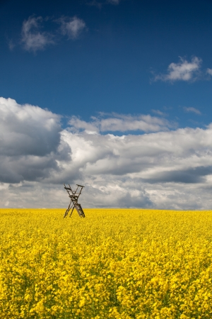 Flowers of oil in rapeseed field with hunting tower Stock Photo - 21773258