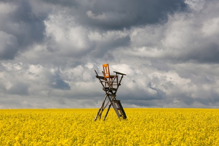 Flowers of oil in rapeseed field with hunting tower Stock Photo - 21826202
