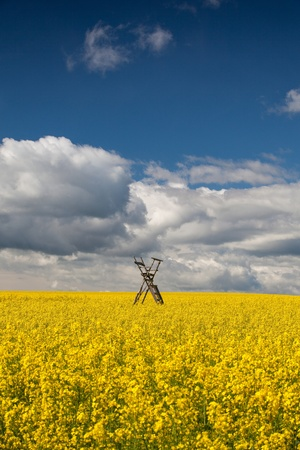 Flowers of oil in rapeseed field with hunting tower Stock Photo - 22077948