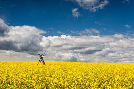 Flowers of oil in rapeseed field with hunting tower Stock Photo - 25374876