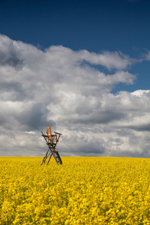 Flowers of oil in rapeseed field with hunting tower Stock Photo - 25682170