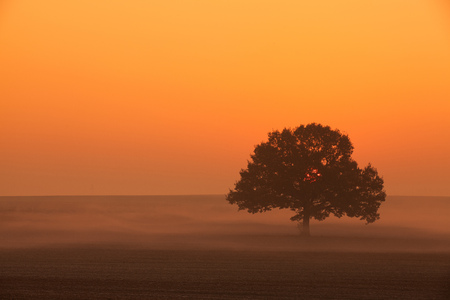 memorable: Memorable lonely tree on the empty field in the morning mist