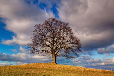 gallow: Gallows Hill - Memorial maple tree on the mystic place in Votice, Czech Republic