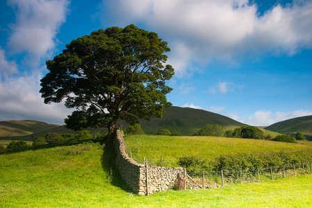 yorkshire dales: Paisaje t�pico en el Parque Nacional de Yorkshire Dales, Sedbergh, Cumbria, Inglaterra Foto de archivo