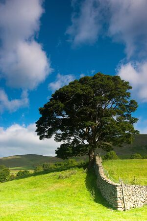 dales: Typical landscape in Yorkshire Dales National Park, Sedbergh,Cumbria, England