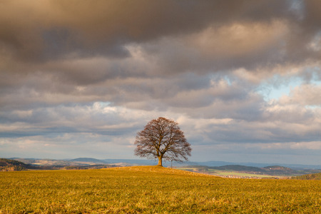 mystic place: Gallows Hill - Memorial maple tree on the mystic place in Votice, Czech Republic