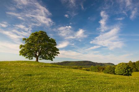 교수대 힐 - Votice, 체코 공화국에서 가장 신비한 장소에 기념관 단풍 나무