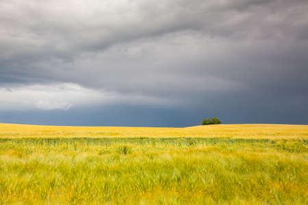 harvest time: Harvest time - Summer landscape before heavy storm
