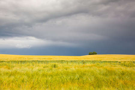 Harvest time - Summer landscape before heavy storm