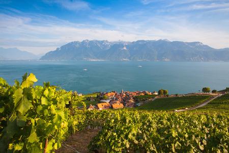 leman: Vineyards of the Lavaux region over lake Leman (lake of Geneva),Switzerland