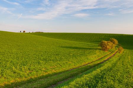 moravia: Path between green fields, Moravia, Czech Republic