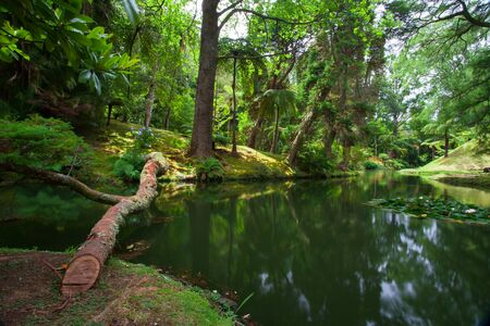 terra: The Terra Nostra Garden on Sao Miguel island, Azores. It is located in the midst of this magnificent water system.