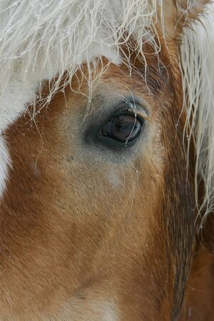 steed: Detail of lovely brown horse eye in winter weather Stock Photo