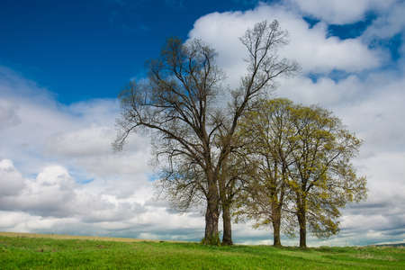 krkonose: Lonely group of trees  on the Krkonose mountains Stock Photo