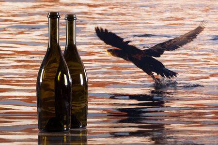 ornitology: Two bottles from red wine and cormorant flying over the river at sunset