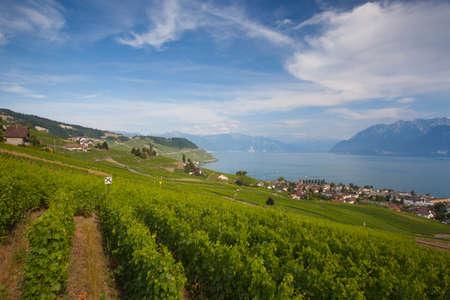 leman: Evening on vineyards of the Lavaux region over lake Leman (lake of Geneva), Switzerland