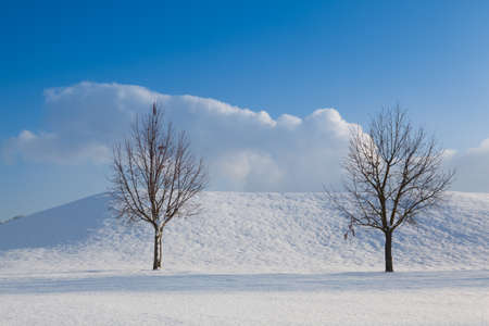 Two lonely trees in a winter landscape under blue sky