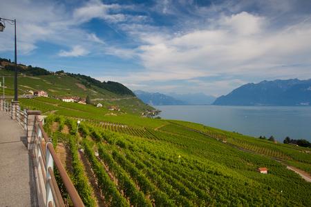 montreux: Evening on vineyards of the Lavaux region over lake Leman (lake of Geneva), Switzerland