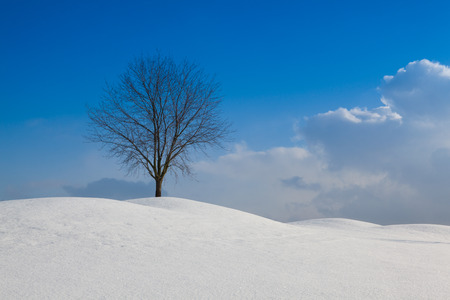 Lonely tree in a winter landscape under blue sky