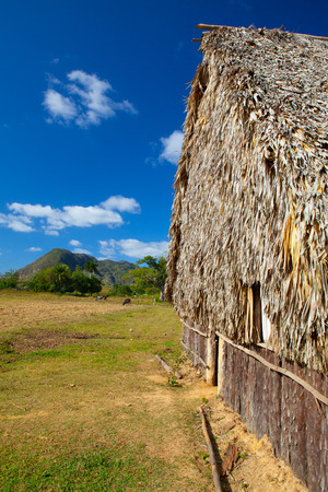 curing: Typical barn on tobacco plantations.Barn used for curing tobacco. The Vinales valley, Pinar del Rio, Cuba