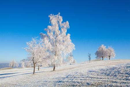 Snow and hoarfrost covered trees in the frosty morning. Amazing winter landscape.