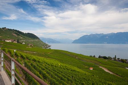 Vineyards of the Lavaux region over lake Leman (lake of Geneva),Switzerland