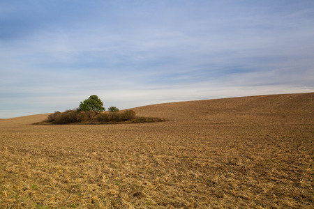 Autumn landscape with agricultural land, recently plowed and prepared for the crop.Central Bohemian Upland, Czech Republic.