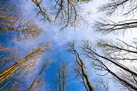 Sky view through the trees of a forest in autumn. Looking up at the trees. Low angle view on the canopy of a forest Banco de Imagens