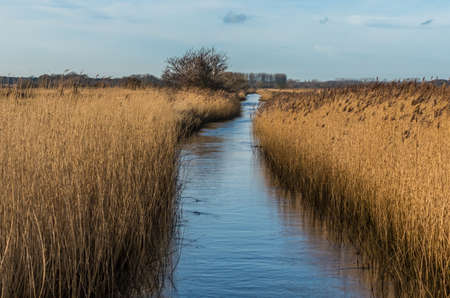 dyke: Water filled drainage dyke edged with Suffolk reeds under a blue sky in Minsmere nature reserve. Stock Photo