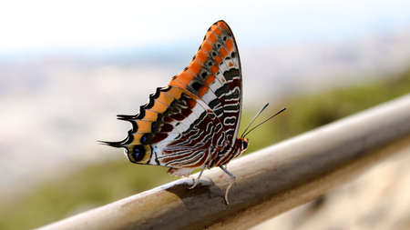 A detailed photograph of a beautiful butterfly that decided to pose for the camera on the mountains surrounding a Spanish city