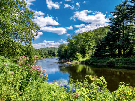 The Clarion river nature scene nestled into Cooks Forest State Park in Pennsylvania near the Allegheny National Forest.  Wildflowers and trees with a bright blue sky and clouds reflecting in the water