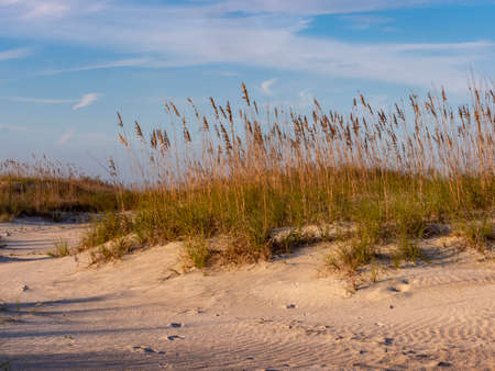 Sand dune at Anastasia State Park in St. Augustine, with grasses and blue skies right before golden hour, making a beautiful nature landscape scene.