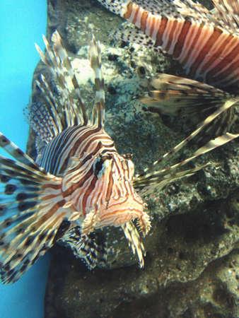 aqua: Beautiful fish in sea