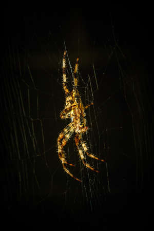 eight legs: Spider on spider web close-up in the dark Stock Photo